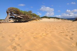 the sand dunes behind the beach of Piscinas near Guspini in south-west Sardinia